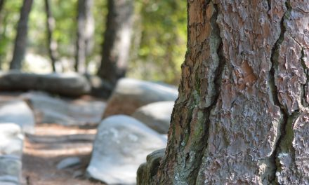 Wisdom of the Forest as Told by a Forester